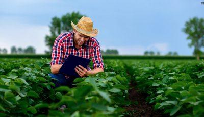 Homem cultivando mudas em plantação